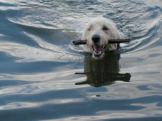 sadie fetching a stick